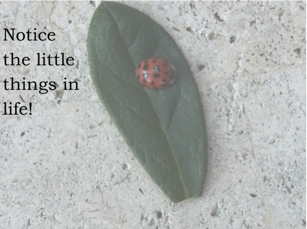 Notice the little things in life
