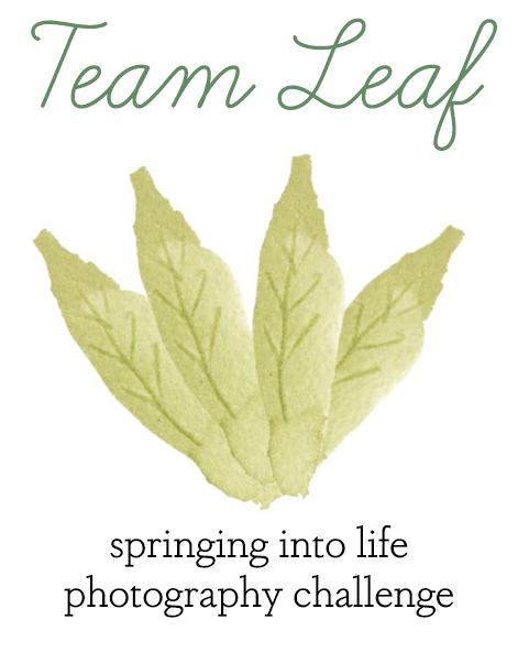 Team Leaf