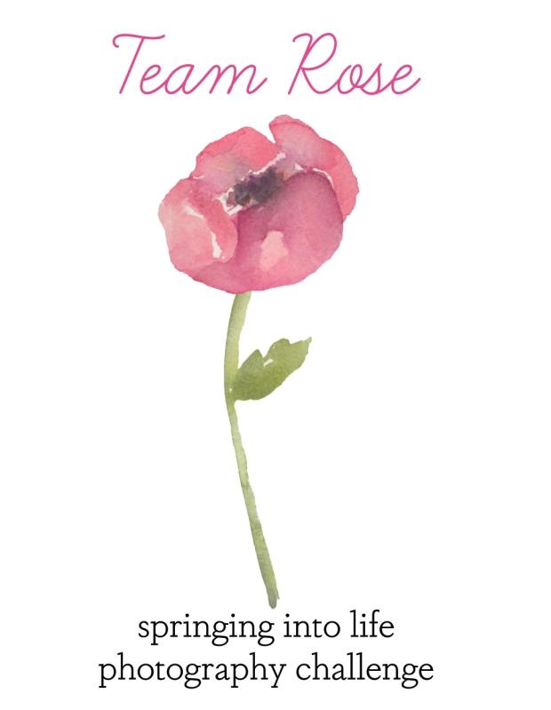 Team Rose